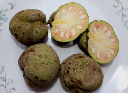 globose: Monkey-jack, monkey-fruit, Artocarpus lakoocha, deciduous tree with oblong to elliptic leaves, up to 30 cm long and 6-8 cm irregularly globose edible fruits