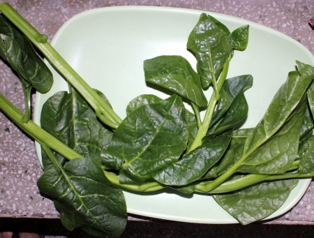syn: Ceylone-spinach, Malabar spinach, Basella alba  syn  Basella rubra , a leafy vegetable, s soft stemmed vine with thick heart-shaped leaves and mild flavour used as vegetable  Stock Photo
