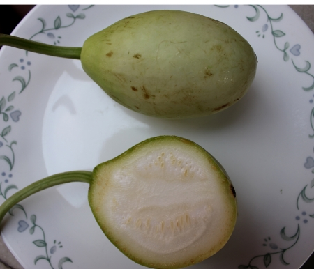 syn: Bottle gourd, Kalabash, opo squash, drinking gourd, Veitnam gourd, Lagenaria siceraria Lagenaria vulgaris syn, a vine with heart-shaped leaves, white flowers and fruits globose to cylindrical, used as vegetable, water storage and musical instruments