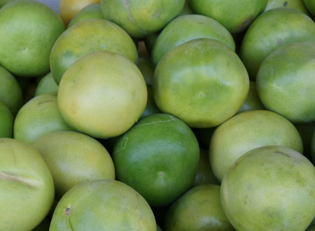 Pomelo, shaddok, Citrus maxima  syn  Citrus grandis, Citrus decumana,tree with yellow to orange fruits, large often up to 16 cm in size, globose, grown as ornamental or dessert fruit Stock Photo - 20384726