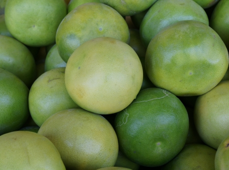 globose: Pomelo, shaddok, Citrus maxima  syn  Citrus grandis, Citrus decumana,tree with yellow to orange fruits, large often up to 16 cm in size, globose, grown as ornamental or dessert fruit