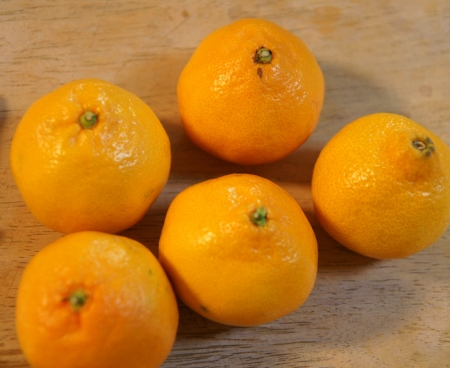 Satsuma, Citrus reticulata, deep orange globose fruit with loose skin, 10-14 segments, sweet pulp, Rutaceae  Stock Photo - 20384729