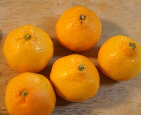 rutaceae: Satsuma, Citrus reticulata, en el fondo de frutas de naranja globoso con la piel floja, 10-14 segmentos, pulpa dulce, Rutaceae