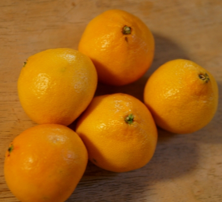 loose skin: Satsuma, Citrus reticulata, deep orange globose fruit with loose skin, 10-14 segments, sweet pulp, Rutaceae  Stock Photo