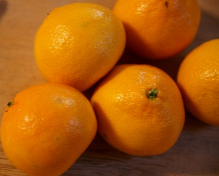 Satsuma, Citrus reticulata, deep orange globose fruit with loose skin, 10-14 segments, sweet pulp, Rutaceae Stock Photo - 20384747
