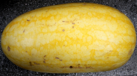 oblong: ellow-skinned watermelon Vishal, Citrullus lanatus, oblong shaped watermelon with yellow skin mottled with irregular orange stripes  The flesh is red, crisp and sweet  Stock Photo