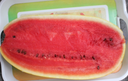 mottled skin: ellow-skinned watermelon Vishal, Citrullus lanatus, oblong shaped watermelon with yellow skin mottled with irregular orange stripes  The flesh is red, crisp and sweet  Stock Photo