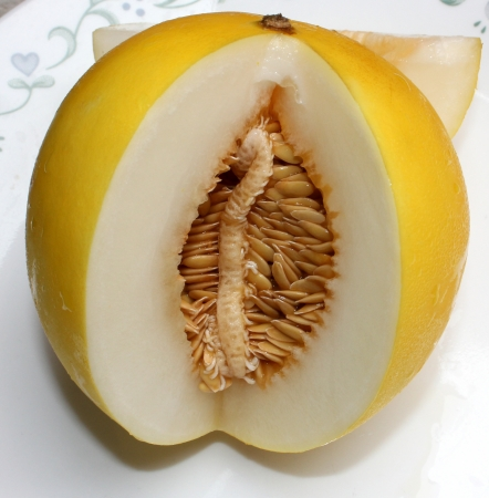 Golden king melon, Cucumis melo var  inodorus, smooth skinned mini size melon with bright golden yellow skin and white crisp flesh and small seed cavity  Excellent as dessert fruit