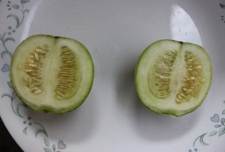 globose fruits: wanga, Cucumis melo subsp  melo var  flexuousus, commonly Grown in Rajasthan and Punjab in India, producing globose to oval green fruits up to 12 cm long, skin green with dark green sutures and greenish white flesh, most space filled by seeds     Stock Photo