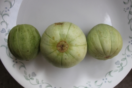 globose: wanga, Cucumis melo subsp  melo var  flexuousus, commonly Grown in Rajasthan and Punjab in India, producing globose to oval green fruits up to 12 cm long, skin green with dark green sutures and greenish white flesh, most space filled by seeds     Stock Photo