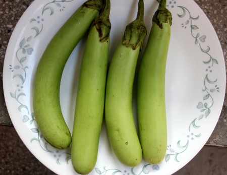 Green Brinjal, Solanum melongena, Solanaceae, cultivated plants with purple flowers and cylindrical green fruits up to 20 cm long