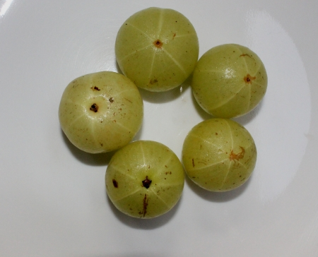 myrobalan: Emblic myrobalan, Indian gooseberry, Phyllanthus ebmica, tree with 4-5 cm pale yellow fruits having high vitamin C content, used in pickles and preserves, Phyllanthus Stock Photo