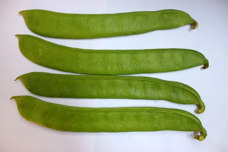 Sword bean, Canavalia gladiata, scimitar bean, Vine with sword-like flat pods up to 30 cm long and up to 5 cm broad with large 25-30 mm long seeds  Pods as vegetable Stock Photo - 22507518