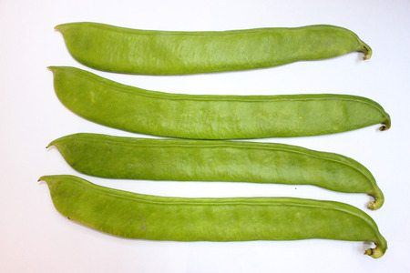 scimitar: Sword bean, Canavalia gladiata, scimitar bean, Vine with sword-like flat pods up to 30 cm long and up to 5 cm broad with large 25-30 mm long seeds  Pods as vegetable  Stock Photo