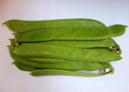 long bean: Sword bean, Canavalia gladiata, scimitar bean, Vine with sword-like flat pods up to 30 cm long and up to 5 cm broad with large 25-30 mm long seeds  Pods as vegetable  Stock Photo