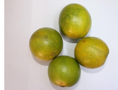 rutaceae: Mosambi, Sweet lim�n, Citrus limetta, Rutaceae, los c�tricos se tornan amarillas cuando maduran con pulpa de color amarillo claro dulce, cultiva en la India