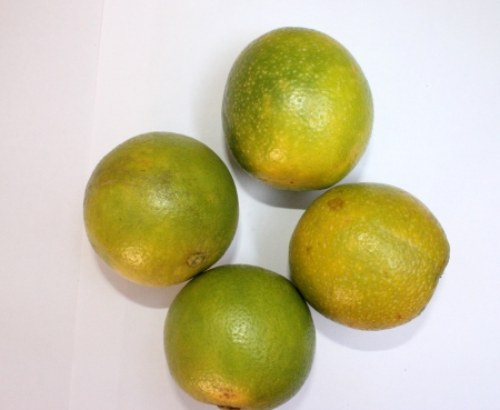 rutaceae: Mosambi, Sweet lime, Citrus limetta, Rutaceae, citrus fruit turning yellow when ripe with sweet light yellow pulp, grown commonly in India