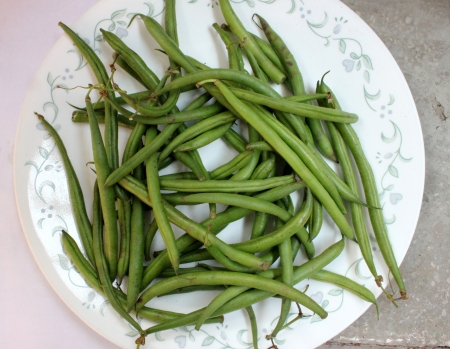 fabaceae: French beans, Phaseolus vulgaris, Fabaceae, pods used a vegetable, ripe seeds as pulse, rajmah