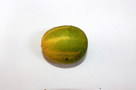 cm: Cucumis hardwickii, Cucumis sativus var  hardwickii, a wild form of cucumber with 4-6 cm long oblong fruits, finally turning yellow and very bitter to eat, Cucurbitaceae
