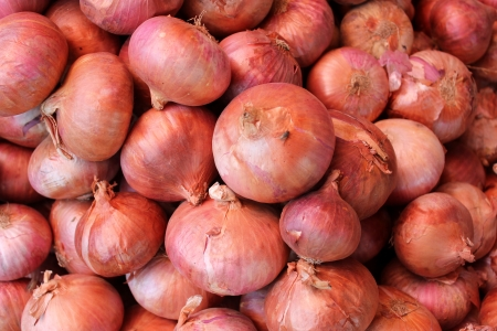 allium cepa: Brown onion, Allium cepa, bulbous plant with mature bulbs covered with brown paper sheaths, used as vegetable and salad and in spices