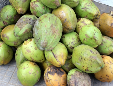 yielding: Coconut fruits, Cocos nucifera, multipurpose plant with young fruits yielding cooling drink, copra in puddings and seasoning, husk for stuffing Stock Photo