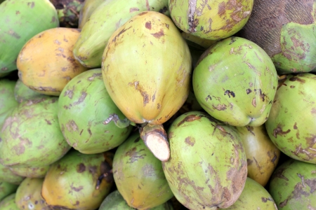 copra: Coconut fruits, Cocos nucifera, multipurpose plant with young fruits yielding cooling drink, copra in puddings and seasoning, husk for stuffing Stock Photo