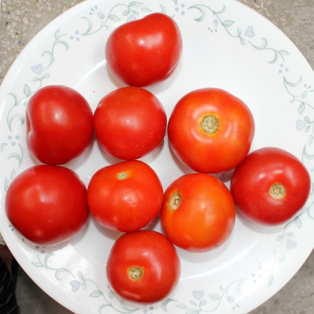 globose fruits: Tomato, Solanum lycopersicum  Lycopersicon esculentum , Solanaceae, Desi Simla variety, globose red fruits are extensively used in soups, chutnies, vegetable gravies and sauces