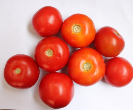 solanaceae: Tomato, Solanum lycopersicum  Lycopersicon esculentum , Solanaceae, Desi Simla variety, globose red fruits are extensively used in soups, chutnies, vegetable gravies and sauces