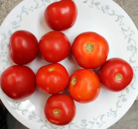 globose: Tomato, Solanum lycopersicum  Lycopersicon esculentum , Solanaceae, Desi Simla variety, globose red fruits are extensively used in soups, chutnies, vegetable gravies and sauces