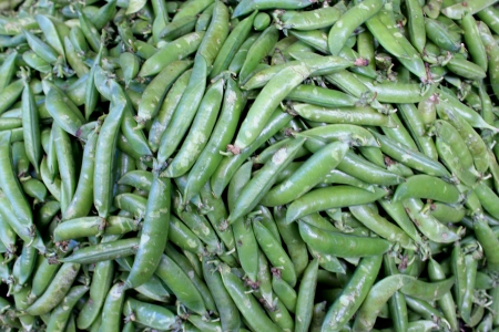 fabaceae: Garden pea, Pisum sativum, Fabaceae  Cultivated herb yielding green pods with seeds used as vegetable or in food fillings  Ripe seeds used as pulse  Stock Photo