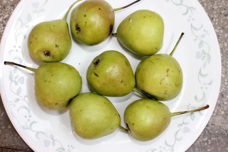 grit: Pear, nashpati, nakh, Pyrus communis, Rosaceae  Deciduous tree with glossy leaves and white flowers yielding pyriform fruits, with lot of grit, eaten raw   Stock Photo