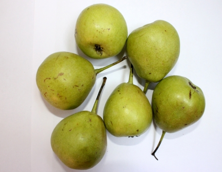 yielding: Pear, nashpati, nakh, Pyrus communis, Rosaceae  Deciduous tree with glossy leaves and white flowers yielding pyriform fruits, with lot of grit, eaten raw   Stock Photo
