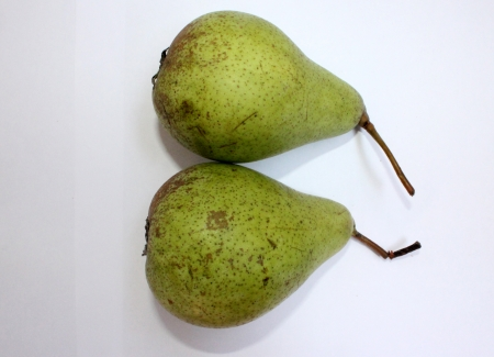 yielding: Pear, Baghu gosha, Pyrus communis, Rosaceae  Deciduous tree with glossy leaves and white flowers yielding pyriform fruits, with larger softer fruits, sweeter