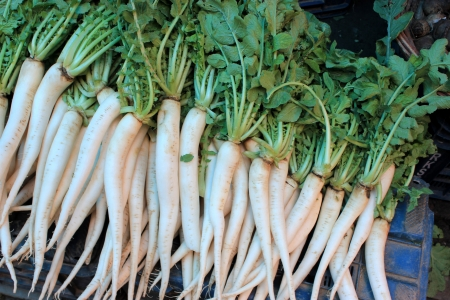 White radish, mooli, Daikon, Raphanus sativus, Brassicaceae, root vegetable with white or red fleshy roots, used as salad and cooked vegetable  Stock Photo