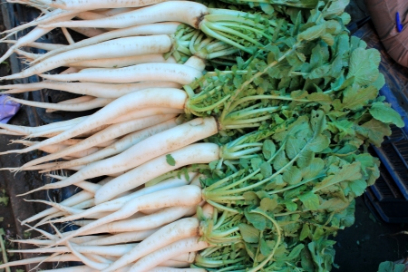 fleshy: White radish, mooli, Daikon, Raphanus sativus, Brassicaceae, root vegetable with white or red fleshy roots, used as salad and cooked vegetable  Stock Photo