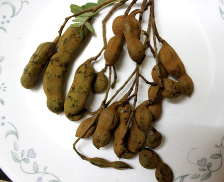 diluted: Tamarind, imli, Tamarindus indicus, tree producing pods whose pulp is soaked in water and diluted to yield tamarind paste widely used with pakoras, salads and in various preparations