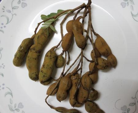 tremp�e: Tamarind, imli, Tamarindus indicus, arbres produisant des gousses dont la pulpe est tremp� dans l'eau et dilu�e pour obtenir la p�te de tamarin largement utilis� avec les beignets, salades et dans diverses pr�parations