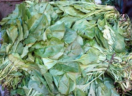 plains indian: Indian spinach, palak, palangi, beet leaf, Beta vulgaris subsp  maritima  syn  Beta bengalensis , grown as leaf vegetable in plains of India, consumed as spinach