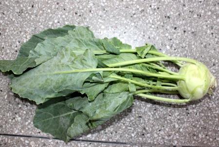 globose: Kohlrabi, knol khol, ganth gobhi, Brassica oleracea var  gongylodes, vegetable crop with globose swollen stem base, stem and leaves used as vegetable
