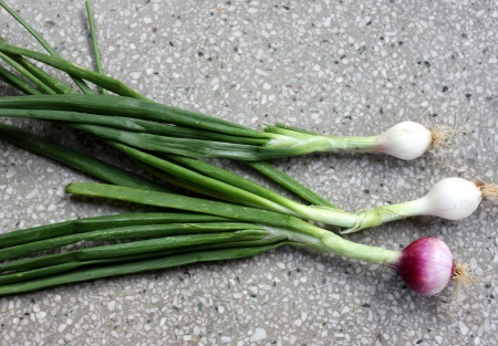 allium cepa: Spring onion, Allium cepa, bulbous plant with mature bulbs covered with red paper sheaths, used as vegetable and salad and in spices