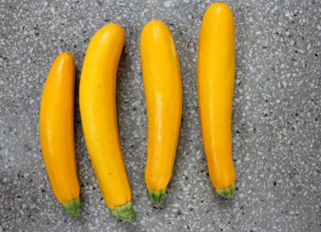 cucurbita: Golden zucchini, yellow zucchini, Cucurbita pepo, vine Producing yellow cylindrical fruit attached by thick green stalk end Cooked like green zucchini