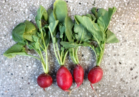 lobed: Red radish, European radish, mooli, Raphanus sativus, root vegetable with small lobed leaves and red small globose to oval roots  flesh white inside, used as salad