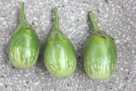 distal: Verde abigarrado berenjena, Solanum melongena, Solanaceae, las plantas cultivadas con flores p�rpuras, h�brido F1 con frutos ovalados verde abigarrado-cremoso amarillo en la mitad distal, vegetal