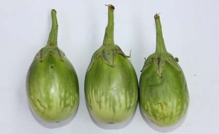 distal: Green variegated Brinjal, Solanum melongena, Solanaceae, cultivated plants with purple flowers, F1 hybrid with green oval fruits creamish-yellow variegated in distal half, vegetable