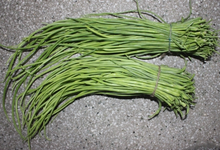cm: Green long rat-tail radish pods, Raphanus caudatus, vegetable crop with small root but grown for for its 30-60 cm long green pods with tail-like tip, used in salads and vegetable