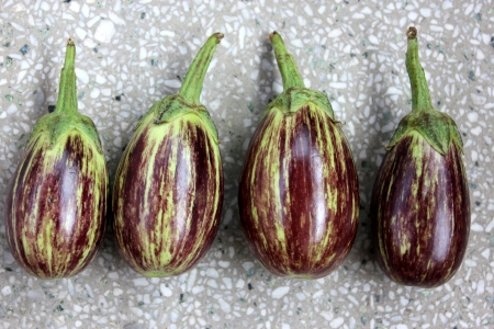 variegated: Purple variegated brinjal, Solanum melongena, hybrid cultivar with purple fruits variegated with yellowish-white, oblong up to 10 cm long fruits  Grown as vegetable  Stock Photo
