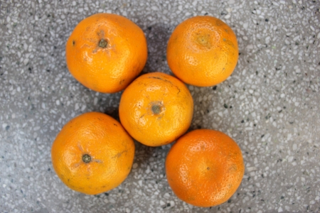 Kinnow, Citrus reticulata, a possible hybrid between King Tangor and Willowleaf mandarine, commonly cultivated in India and elsewhere, orange-yellow slightly depressed fruits with closely packed segments  Sweet with distinctive flavor  Stock Photo - 24426025