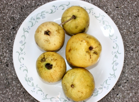 myrtaceae: Guava, Psidium guajava, Myrtaceae, evergreen tree producing white flowers and yellowish-white fruits with soft white or red flesh and plenty of seeds