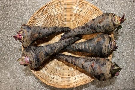 charnu: Carotte noire, Daucus carota, les racines charnues sont tranch�s et utilis�es dans la pr�paration de refroidissement boisson Kanji en Inde avec des �pices