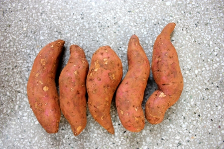 convolvulaceae: Sweet potato, shakar kandi, Ipomoea batatas, Convolvulaceae, a vine producing tuberous roots eaten after baking, used in chat preparations